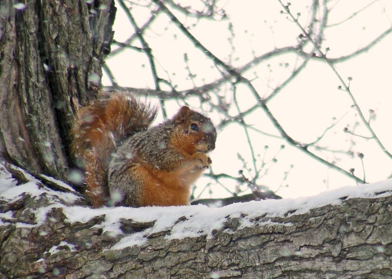 Squirrel-in-tree---9932