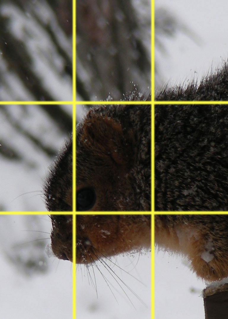 Squirrel-long-crop-with-grid