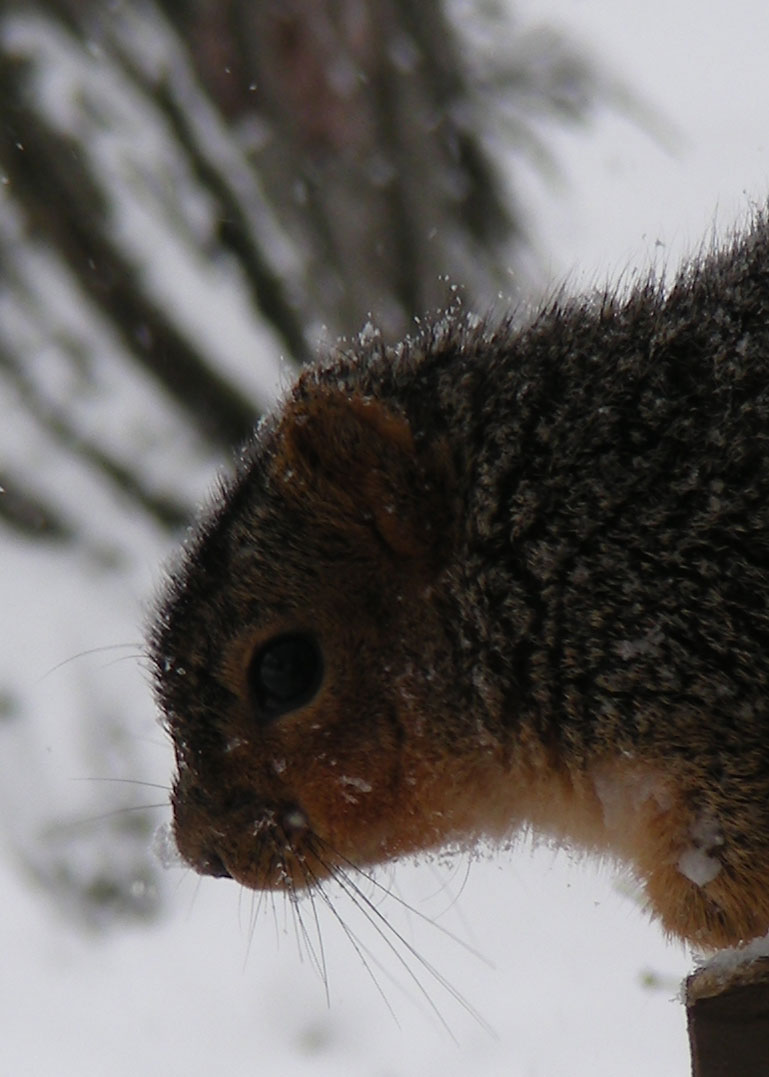 Squirrel-long-crop-without-grid