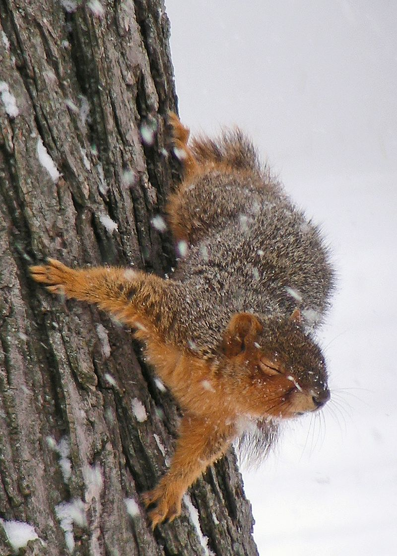 Squirrel-#9940