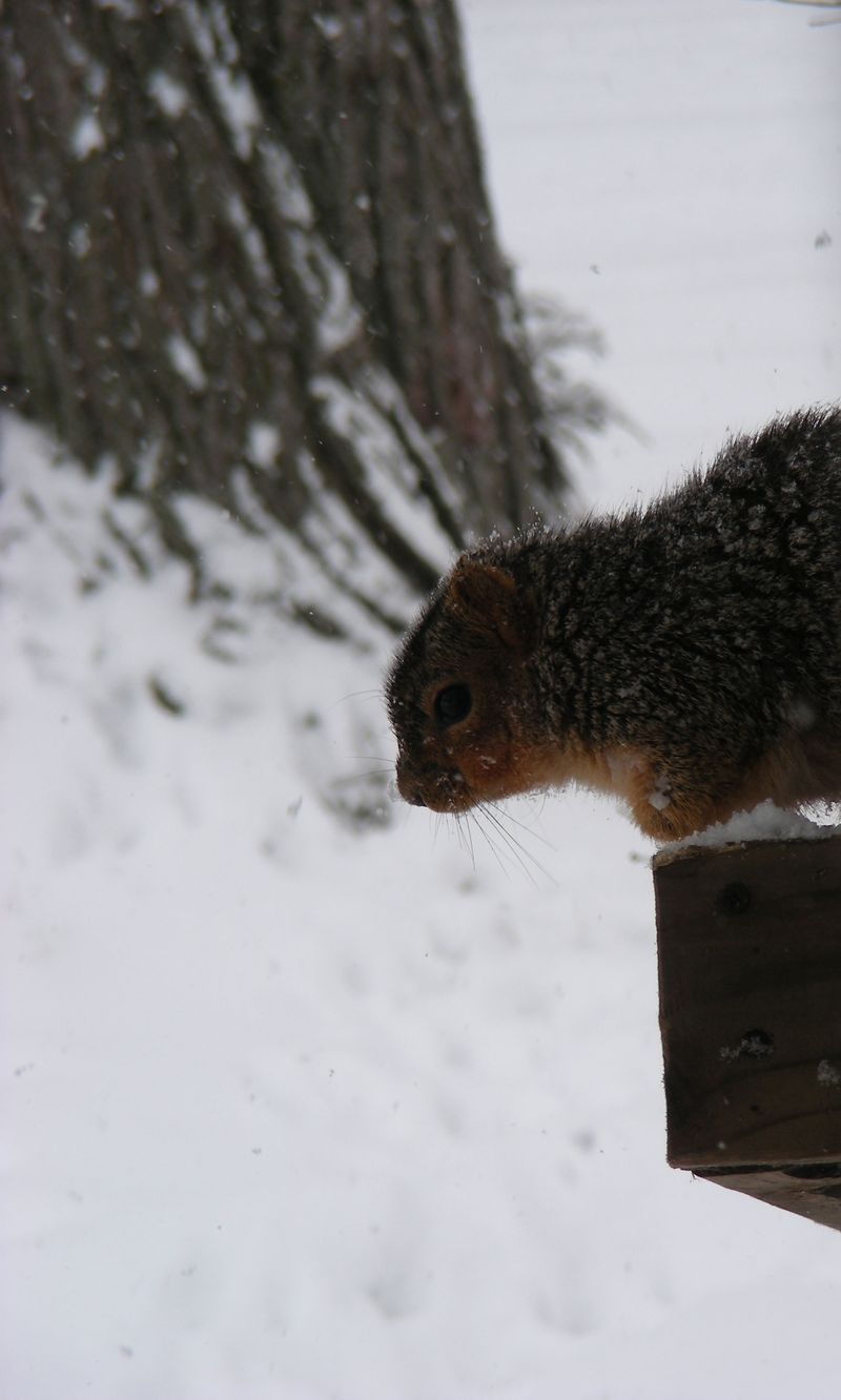 Squirrel-crop-1
