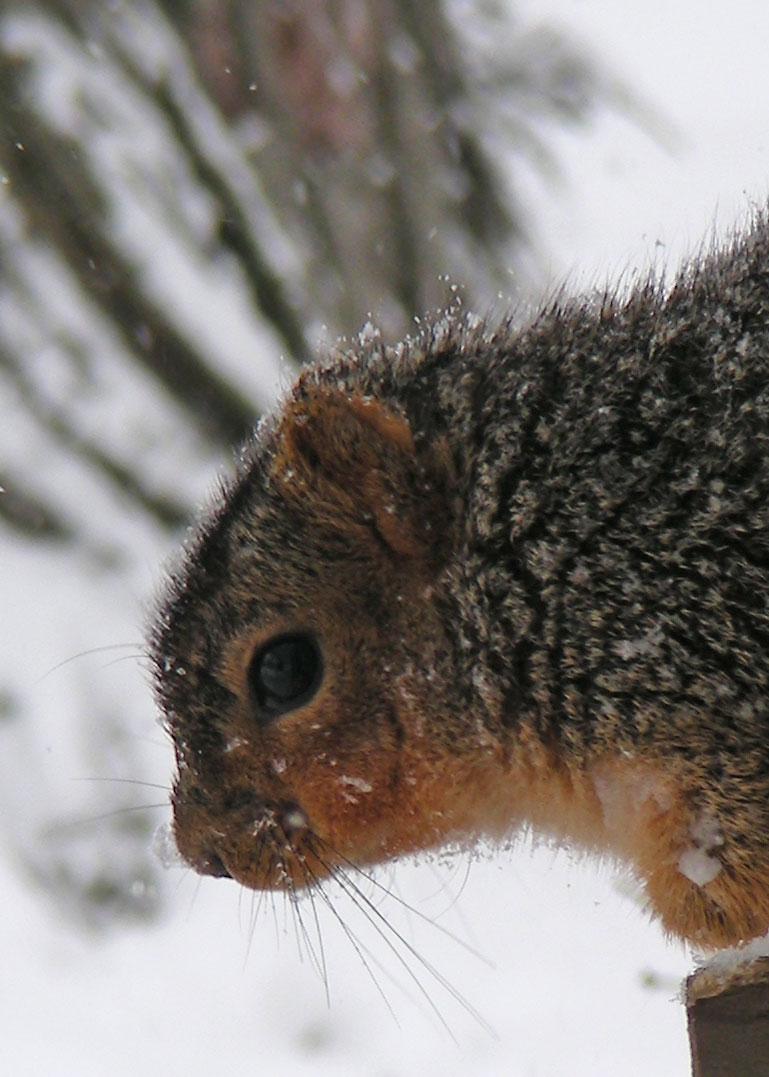 Squirrel---shadow-highlight