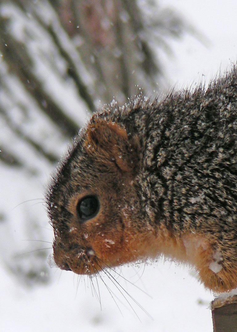 Squirrel-lightened